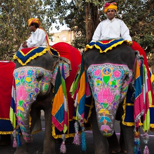 jaipur elephant tour