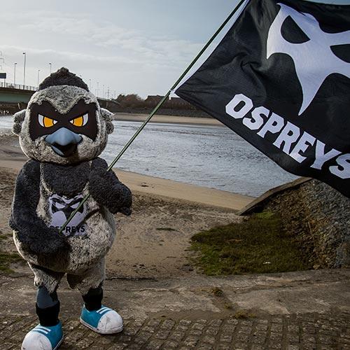 Ozzy the osprey
